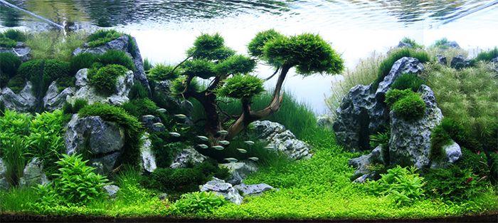 Takeshi Amano Aquarium Aquascape