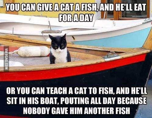 Give a cat a fish...