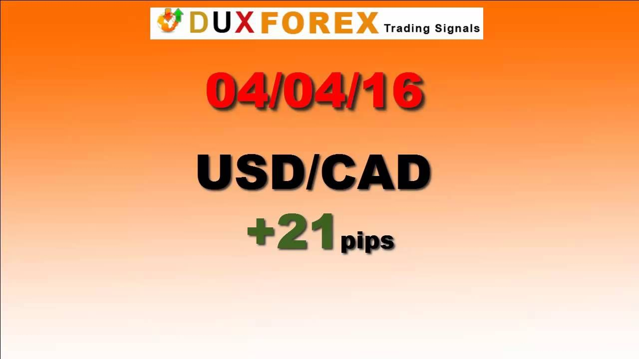 Daily Forex Profits Performance 04/04/16 Forex signals