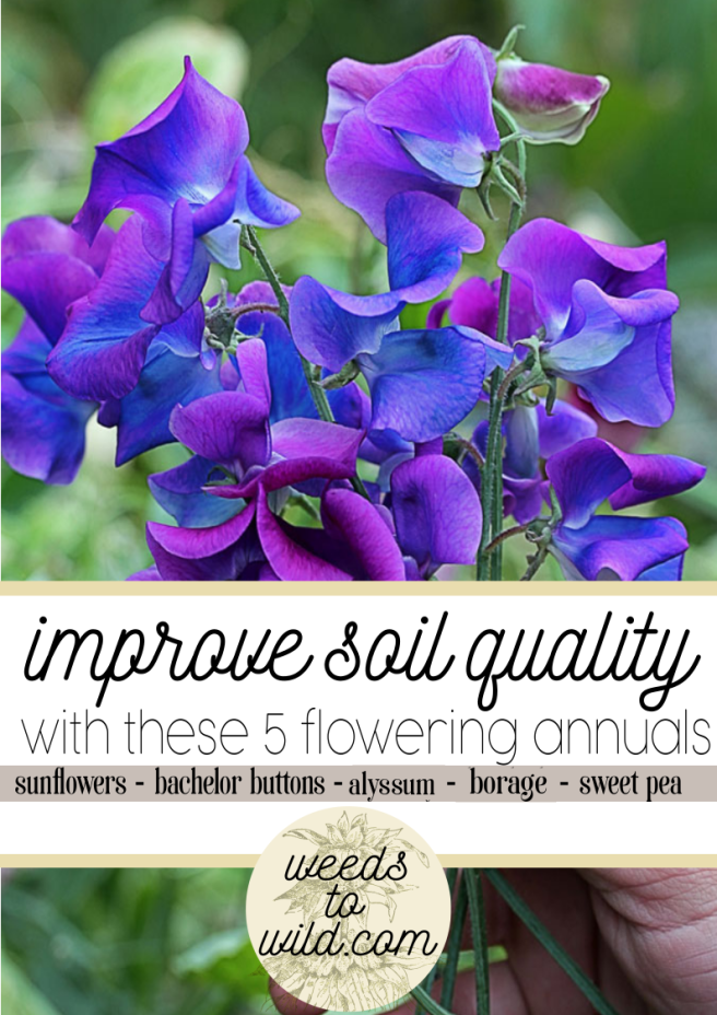 Beautiful Flowers That Will Help Your Soil
