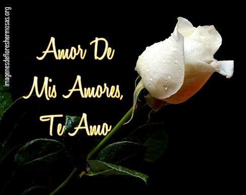 Imagenes De Rosas Blancas Con Frases De Amor Flores Hermosas