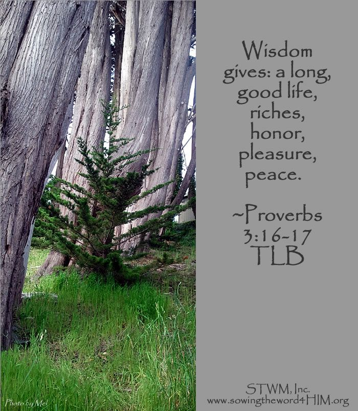 Wings of Wisdom: Long Life and Riches, Proverbs 3 #7