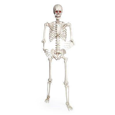 5 led posable skeleton at big lots - Big Lots Halloween Decorations