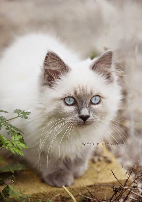 Nini Ninoschka Cats Kittens Cats Cute Cats Dogs