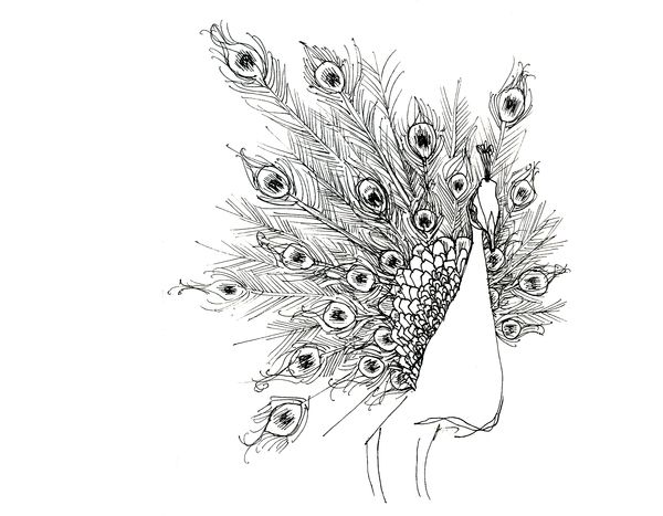Notebook And Pen Sketch Stock Vector Art More Images Of: Peacock Sketches By Devon Kelley-Yurdin, Via Behance