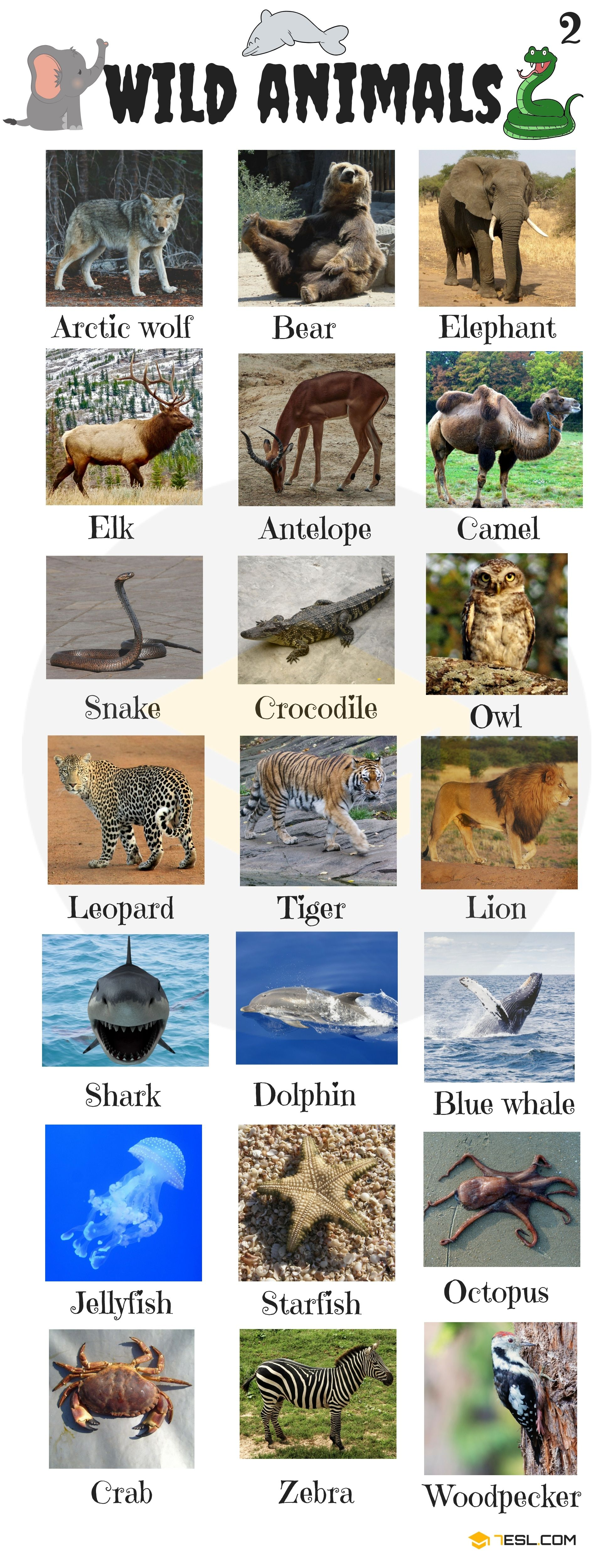 Animal Names Types Of Animals With List Pictures 7 E S L Animals Name In English Wild Animals List Animals Wild