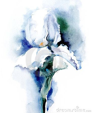 Watercolor Iris By Marina Grau Love The Simplicity Of This And