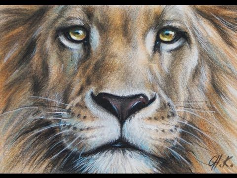 Colored Pencil Drawing Animal Wildlife Portrait Art By Ch Karron