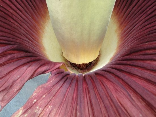 6 Of The Biggest Flowers On Earth