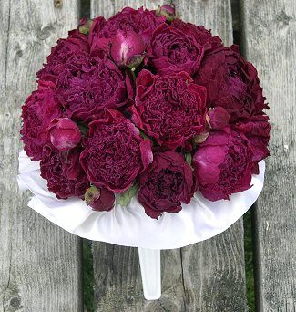 So excited to see that peonies come in such a color!