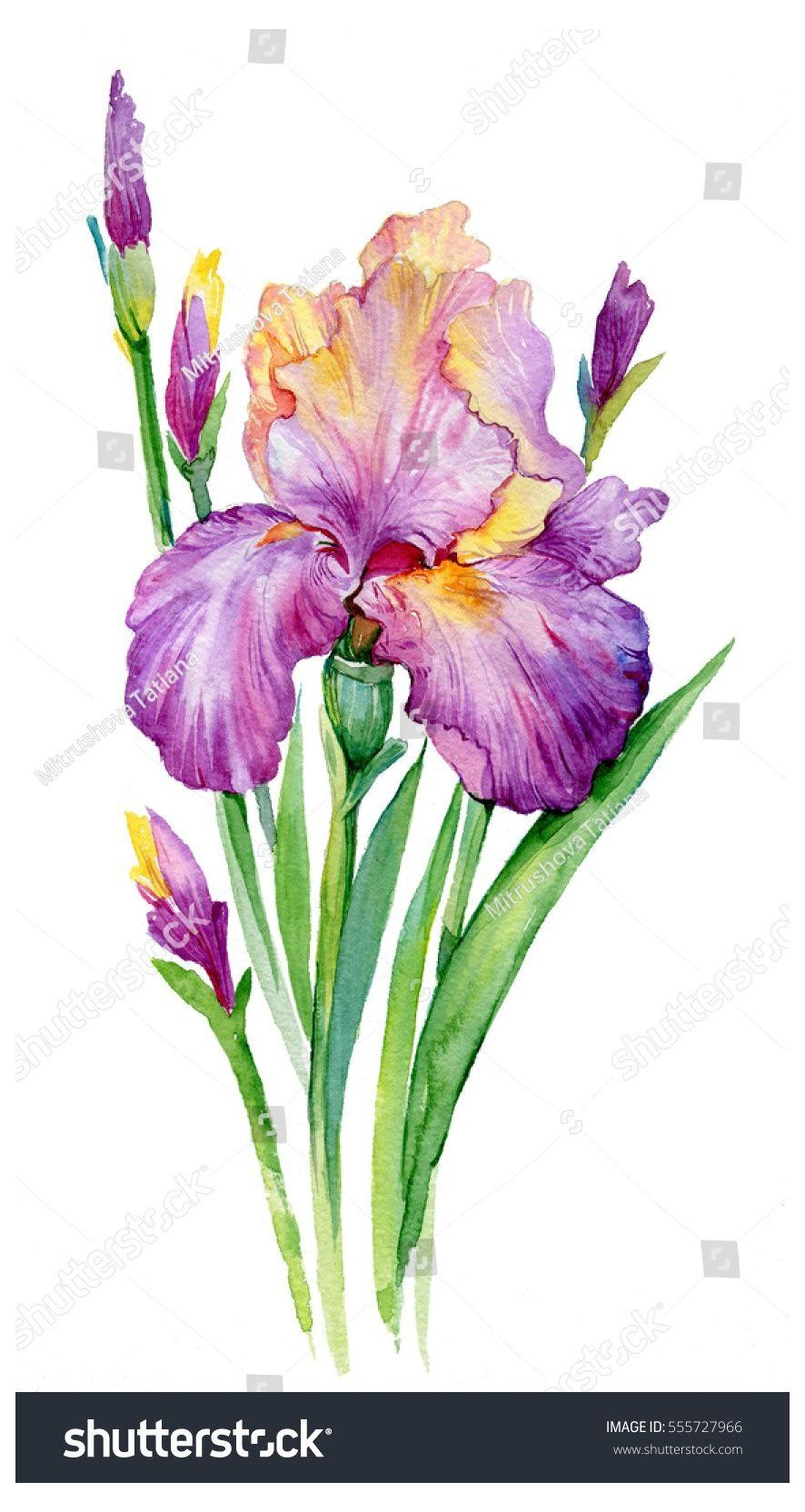 Diy Watercolor Art 60924 Watercolor Art Watercolorart Watercolor Art And How To Create Your Own W In 2020 Iris Painting Watercolor Flowers Paintings Iris Drawing