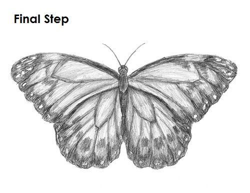 how to draw a detailed butterfly