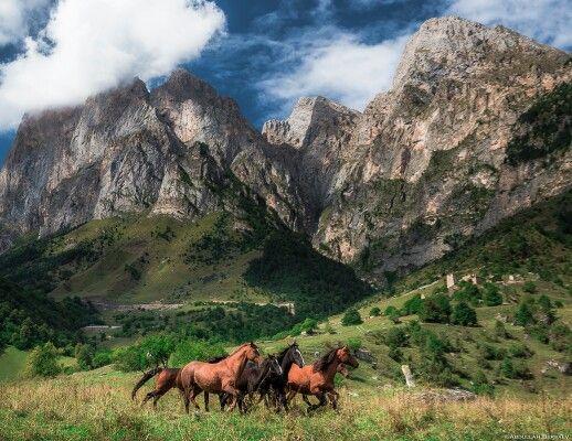 Лошади у горы Цей-Лоам, Ингушетия. Автор фото — Abdullah ...