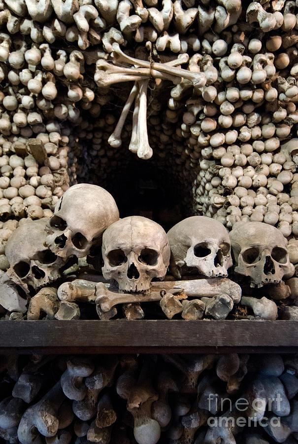 Skull Photograph Human Skulls And Wall Made Out Of Bones By Jaroslaw Blaminsky Skull Human Skull Jaroslaw
