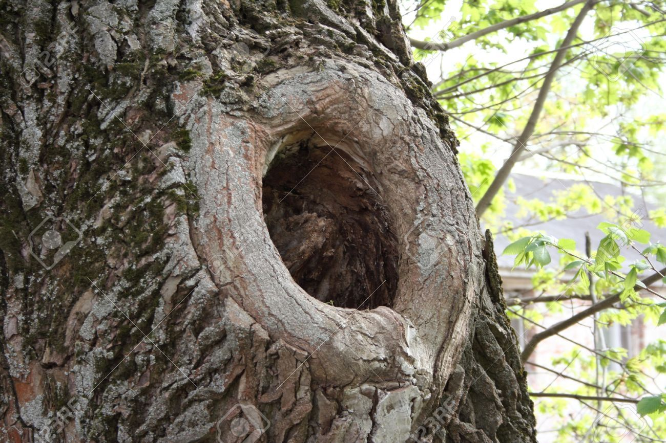 Knothole the knothole in to kill a mockingbird is a symbol of knothole the knothole in to kill a mockingbird is a symbol of communication and relationship biocorpaavc Choice Image