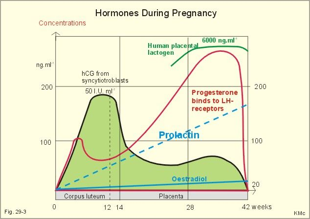 how to raise progesterone levels to get pregnant