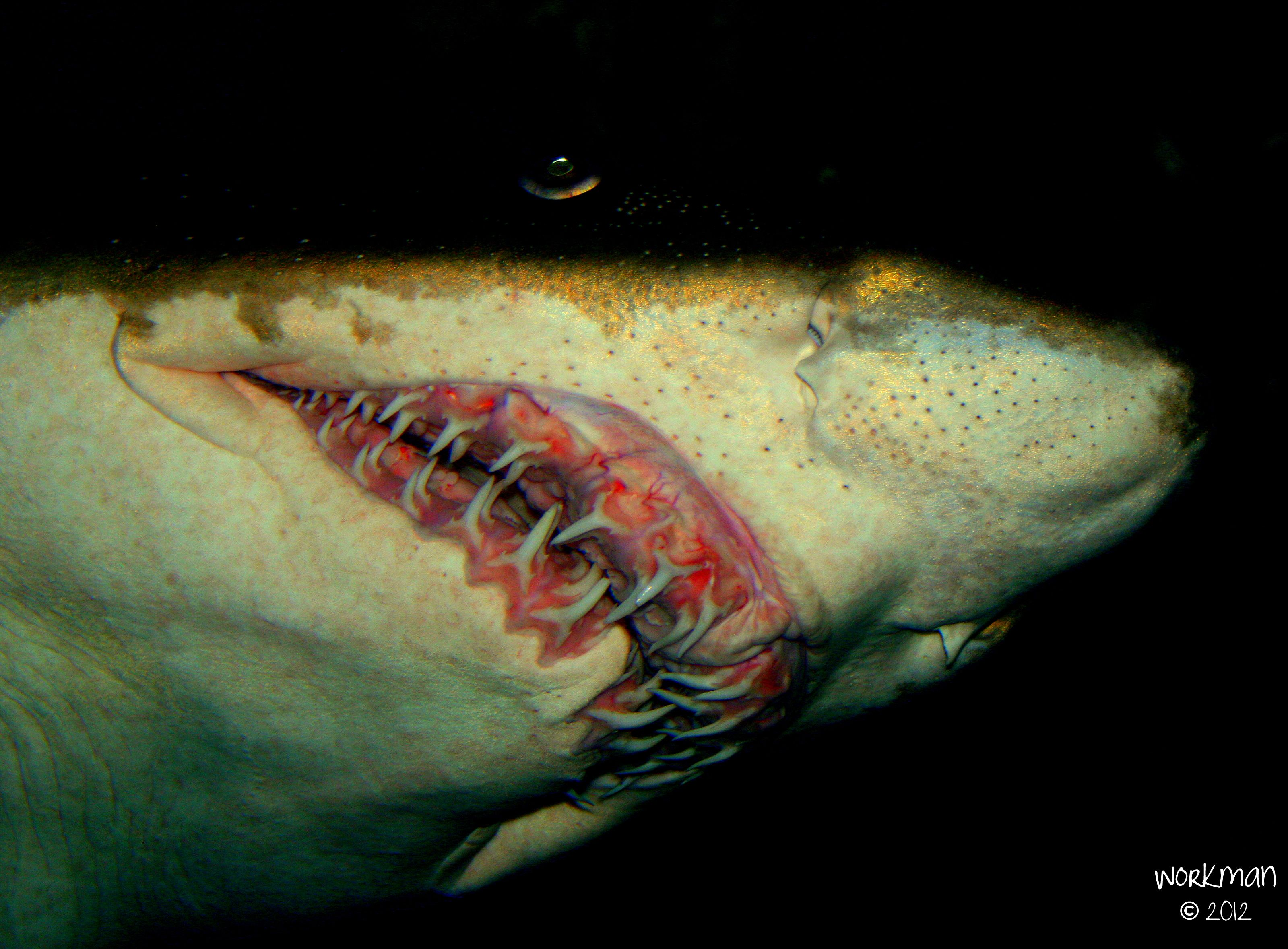 25 best omaha zoo images on pinterest omaha zoo the zoo and zoos shark at the omaha zoo thats a lot of damn teeth publicscrutiny Image collections