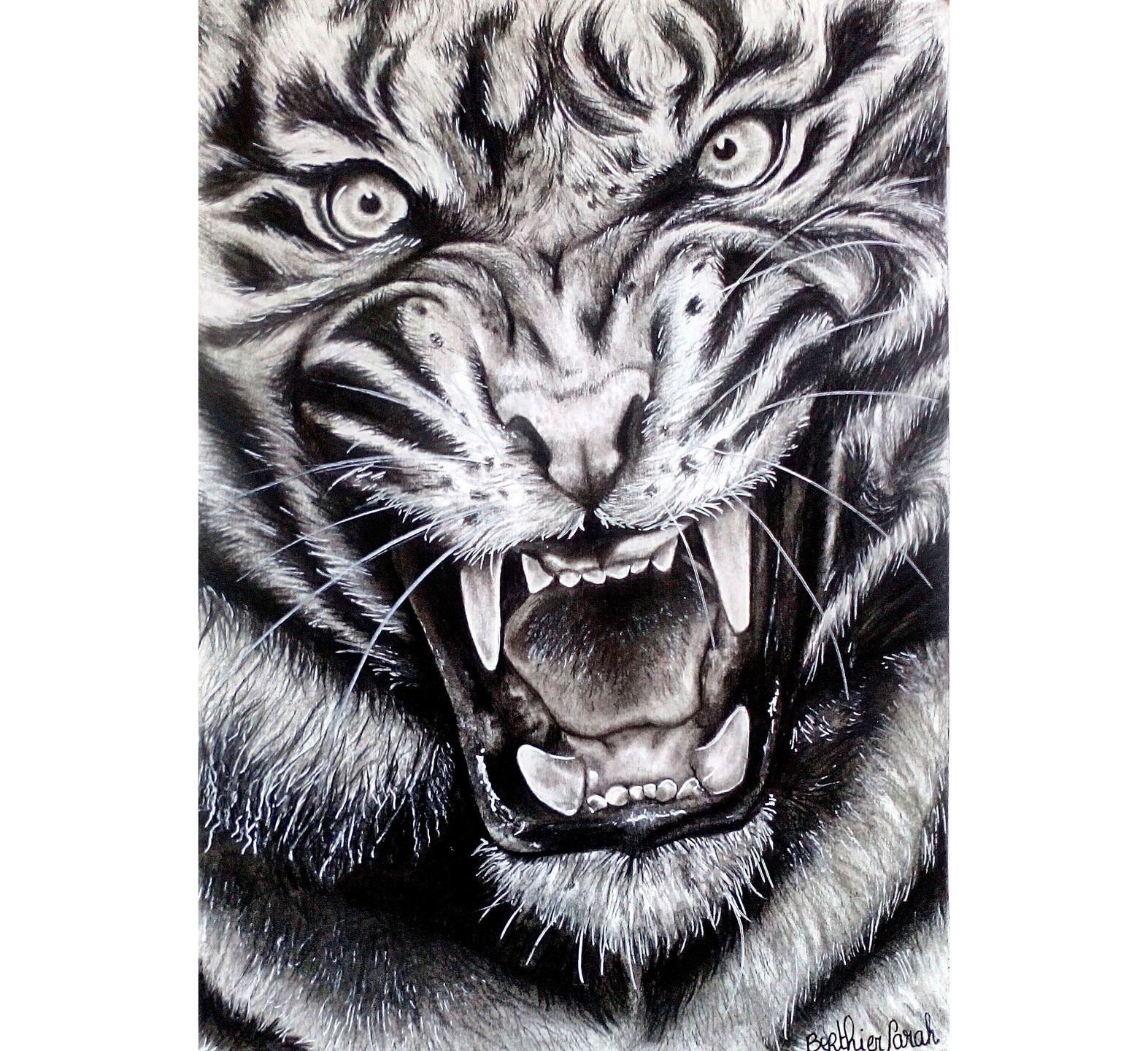 Dessin Realiste Dessin Tigre Rugissant Realiste Noir Et Blanc