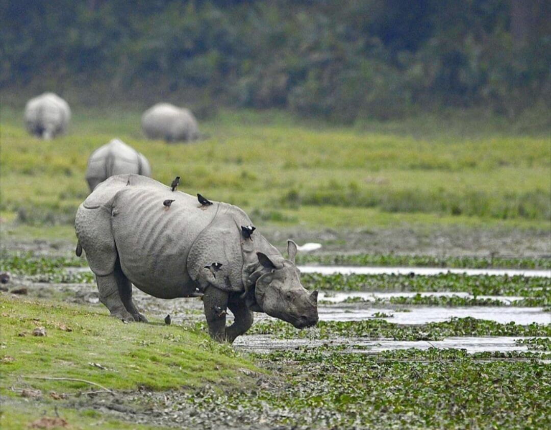 Endangered species in India The land of India is a home