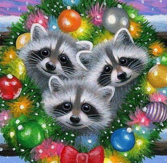 Raccoon Christmas in 2019