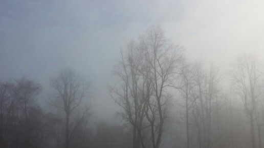 Misty morning in Virginia