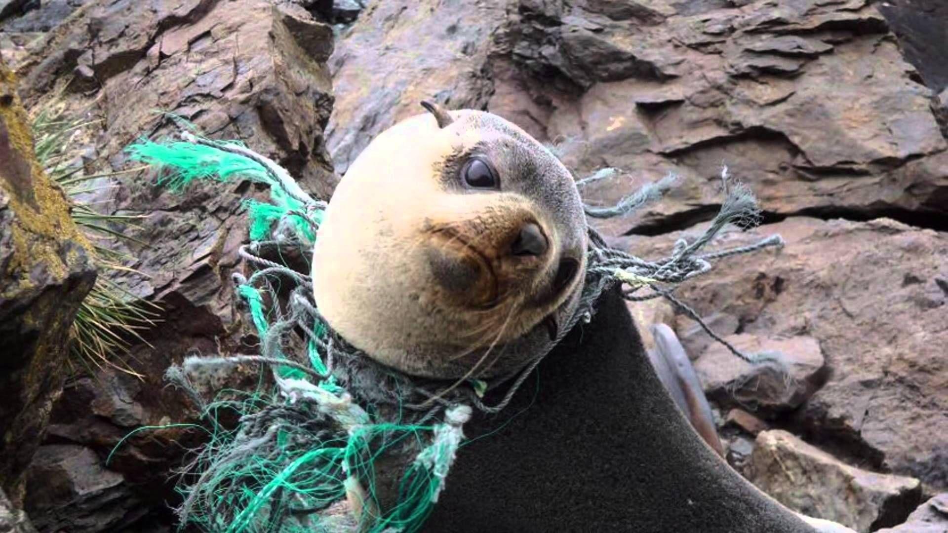 Plastic In The Ocean Youtube Marisol Pinterest