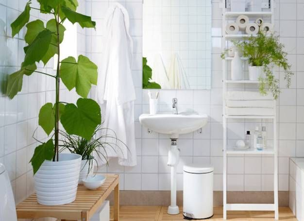 8 Shower Plants That Want To Live In Your Bathroom Shower