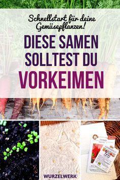 Samen vorkeimen: Schnellstart für deine Gemüsepflanzen - Wurzelwerk