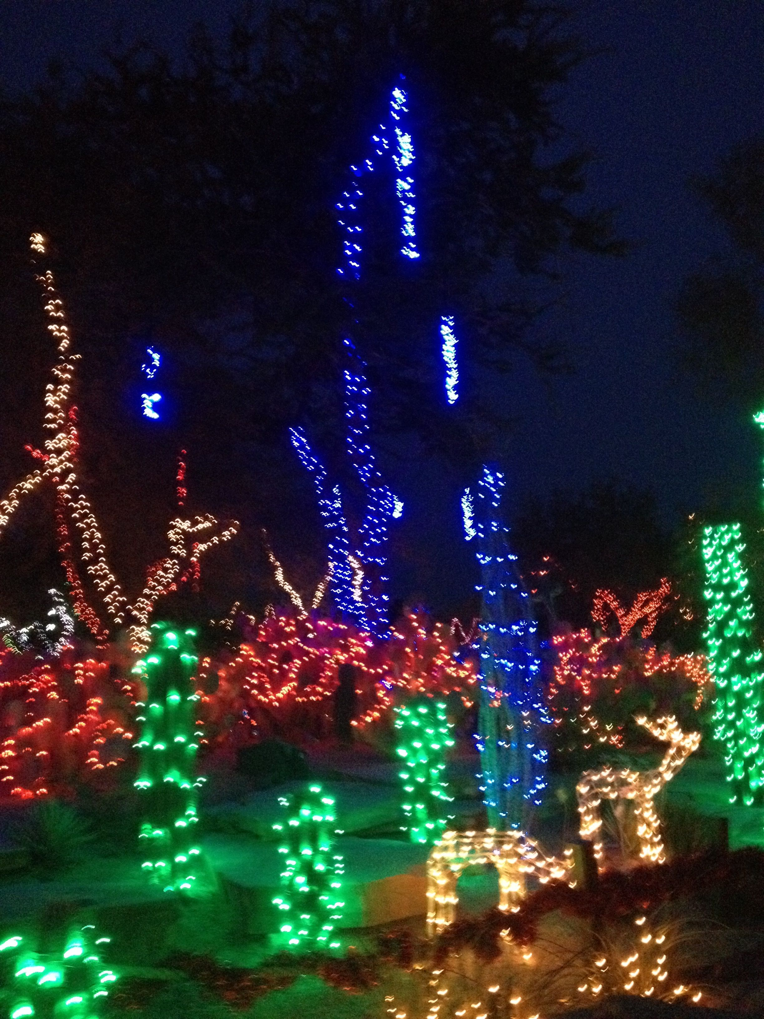 Ethel M Choc Cactus Garden Holiday, Cactus, Christmas