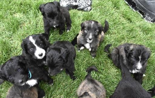 Boxer Puppies For Sale Denver Colorado