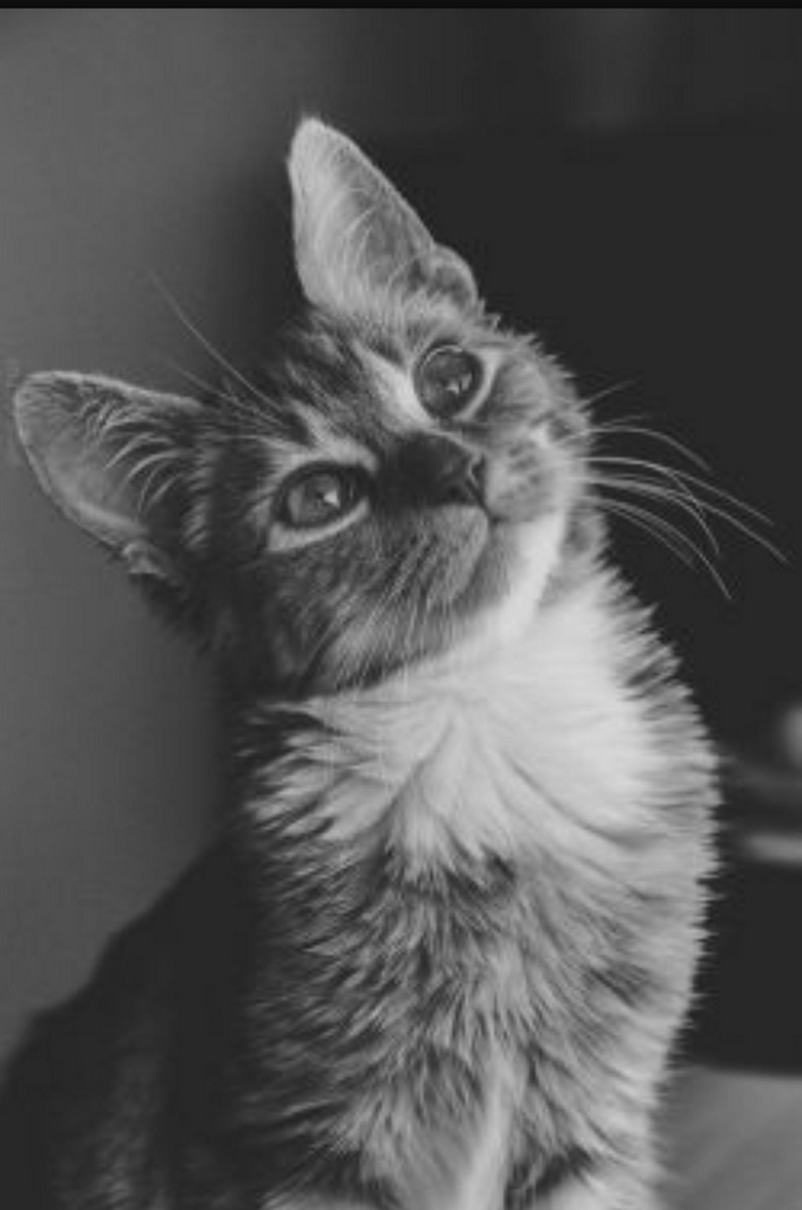 Buongiorno gatti e for Buongiorno con gattini