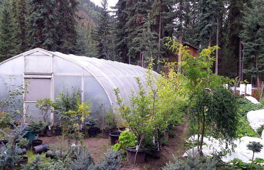 Les Jardiniers Yukonnais Arrivent A Cultiver Des Legumes Grace A Des Petites Serres Qu Ils Installent Derriere Chez Eux Et Au Petite Serre Jardinage Cultiver
