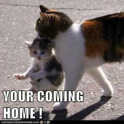 You're coming home!