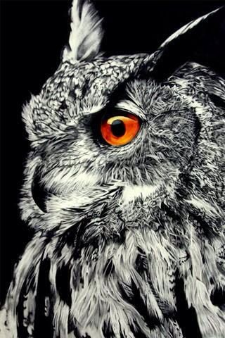 I found a picture of an owl.
