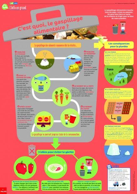 Les causes du gaspillage alimentaire (1jour1actu)
