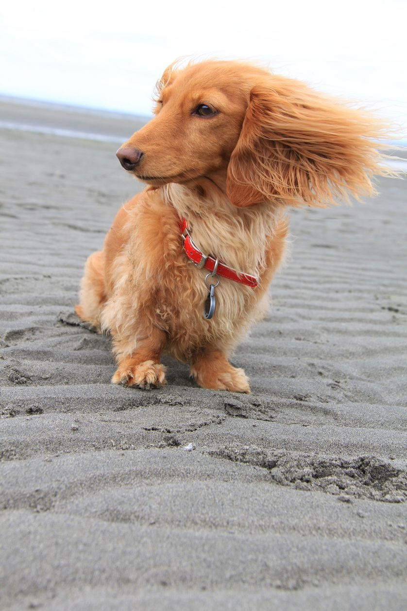 17 Images Of Dogs Enjoying A Windy Day Dog Beach Funny