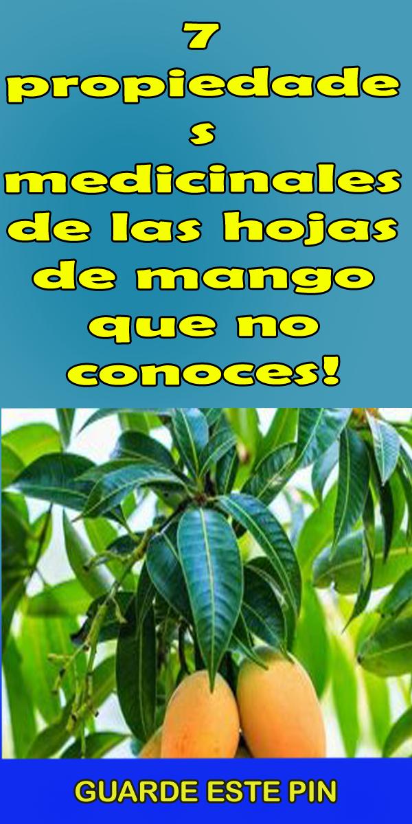 hojas de mango sirve para adelgazar