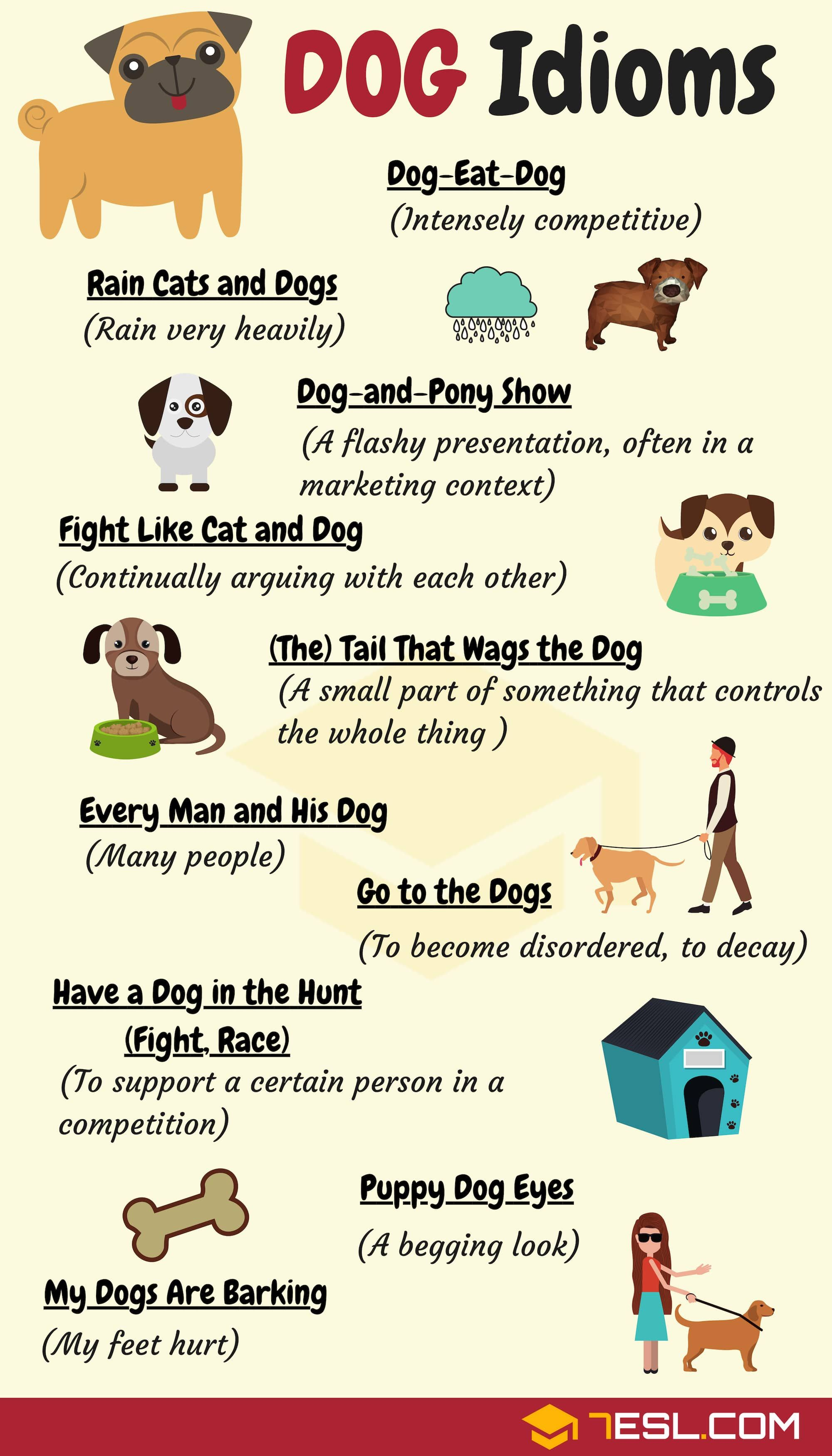 Dog Idioms 16 Useful Dog Idioms And Sayings