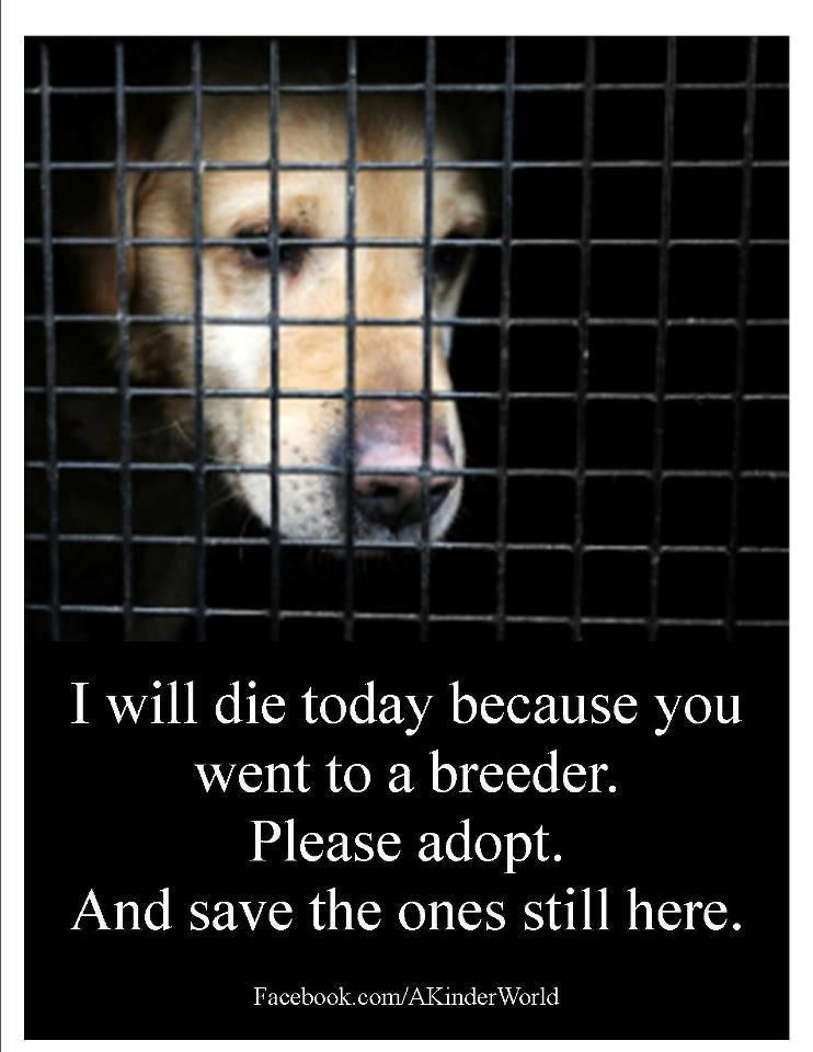 Adopt Dont Shop Dogs Animal Rescue Quotes Dog Cat