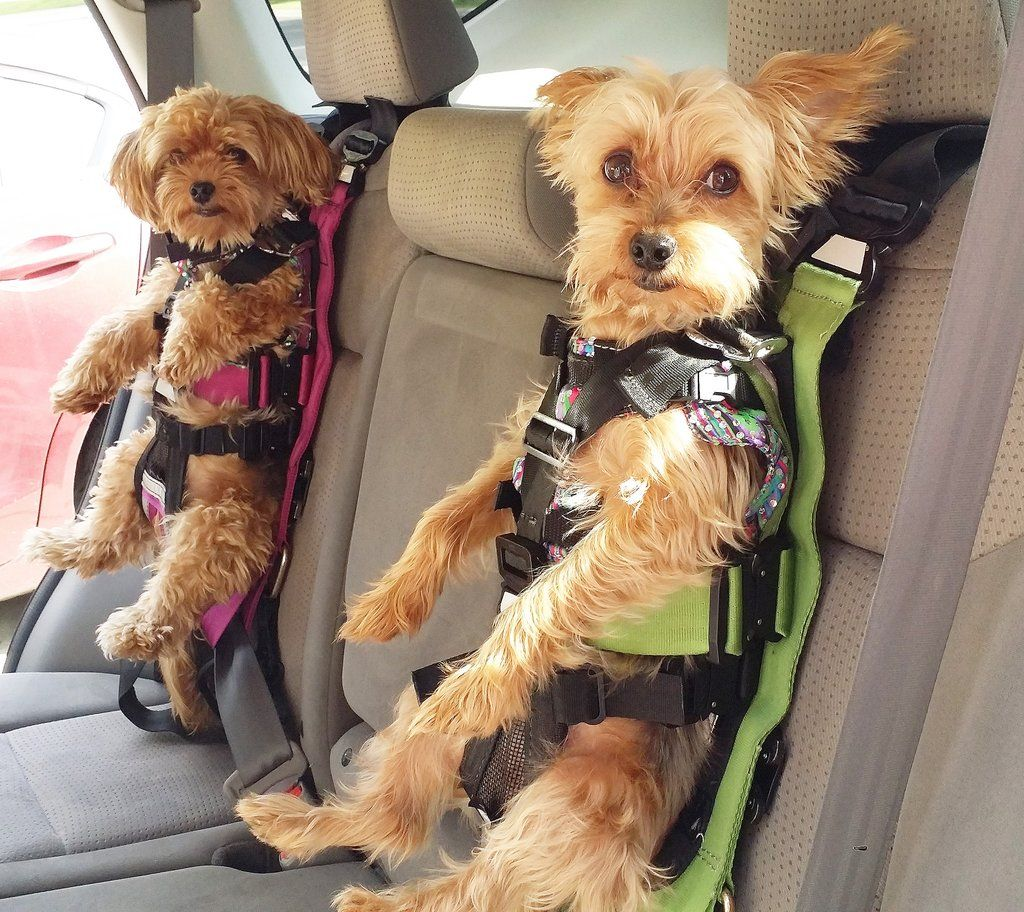 Dog Car Seat With Seatbelt