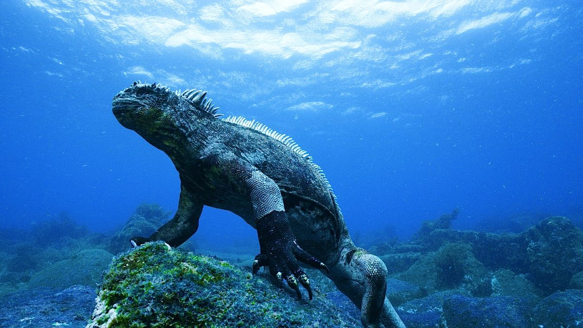 The Galapagos Islands Dive Compare Galapagos Islands