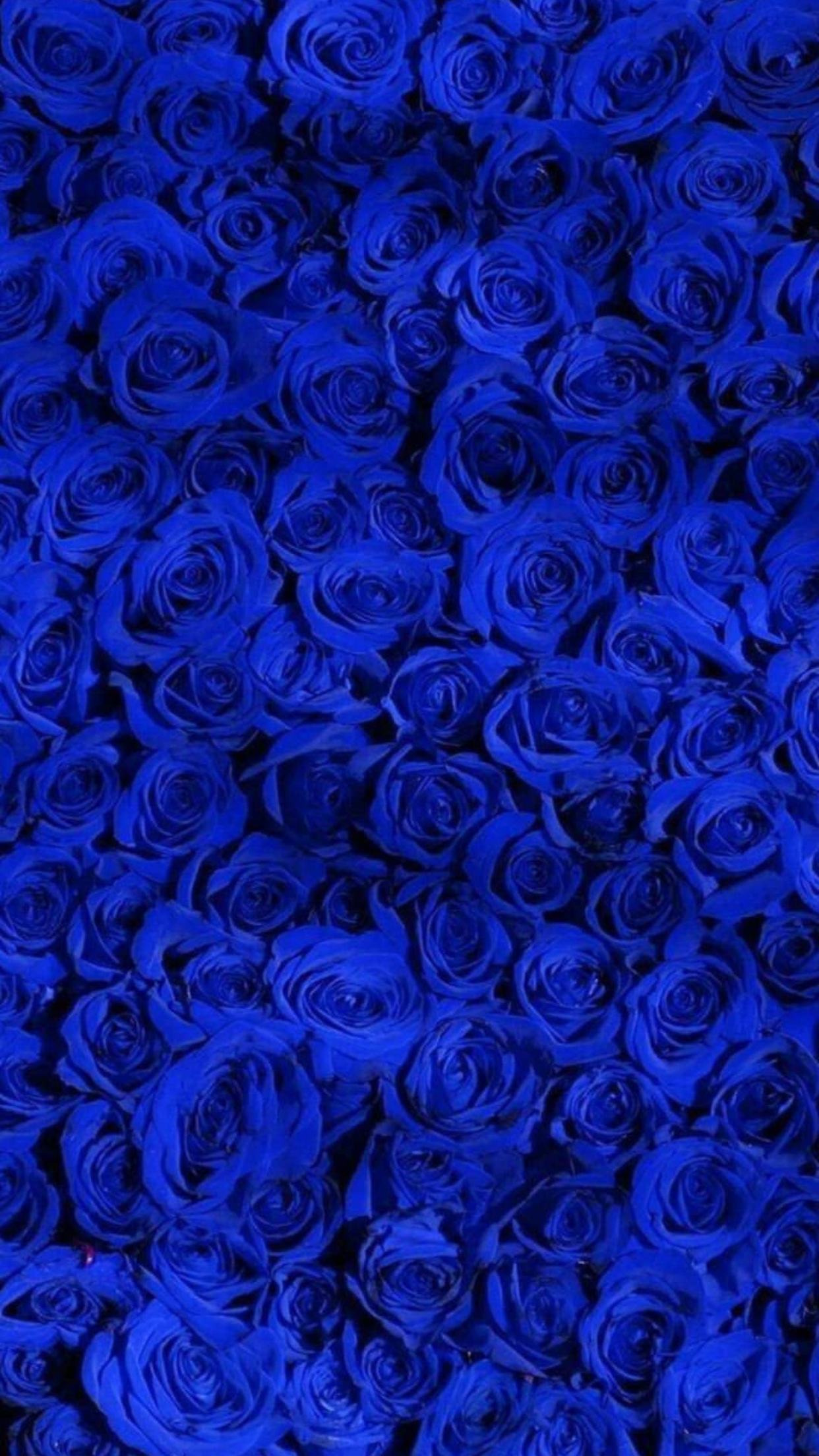 Royal Blue Blue Wallpaper Butterfly Images