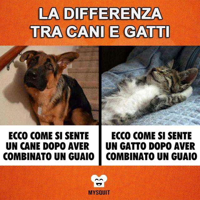Fabuleux Ecco una piccola differenza tra #cani e #gatti. | Animali  VB99