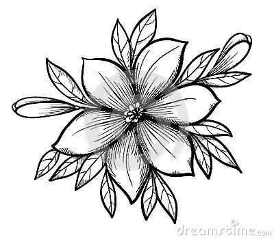 Pin En Dibujos De Flores