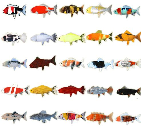 Types of fish google search first projecct pinterest for Types of koi