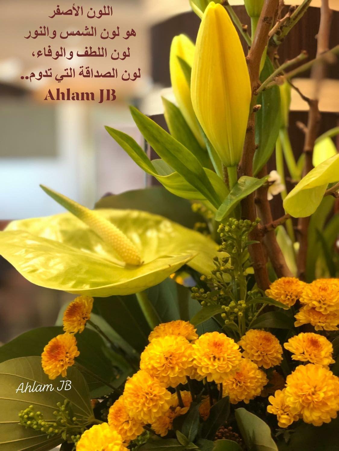 اللون الأصفر هو لون الشمس والنور لون اللطف والوفاء لون الصداقة التي تدوم Plants