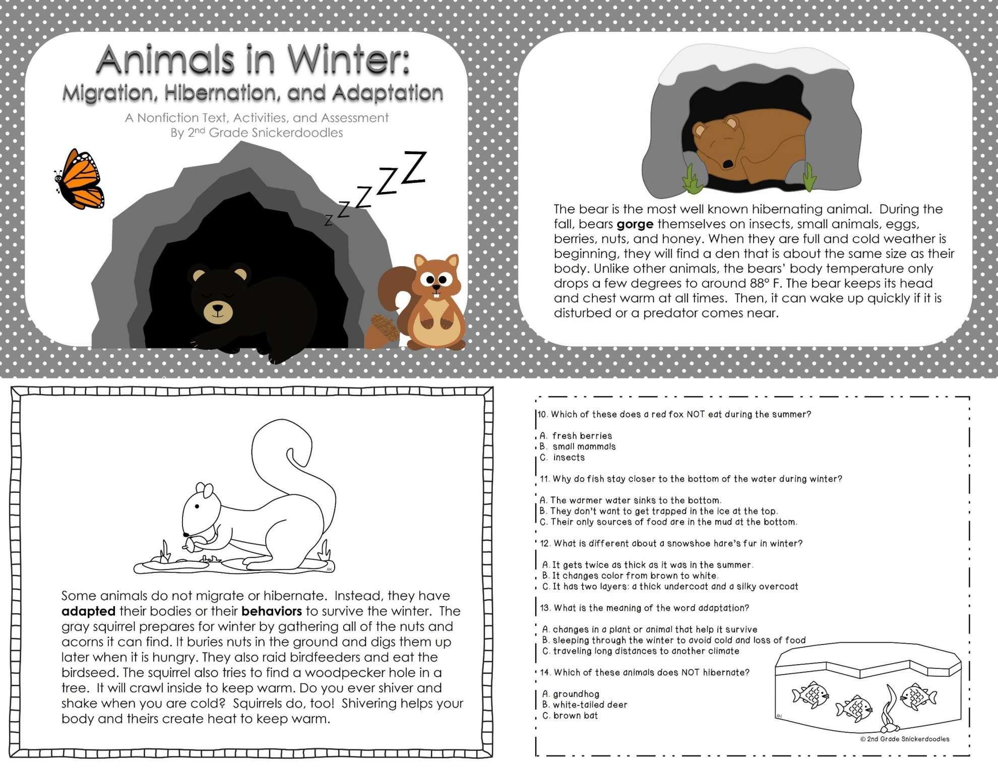 16 Hibernation Worksheets For 2nd Grade
