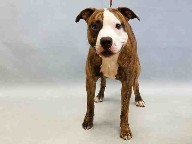 Brendon A1080927 Dogs Nyc Dogs Animals