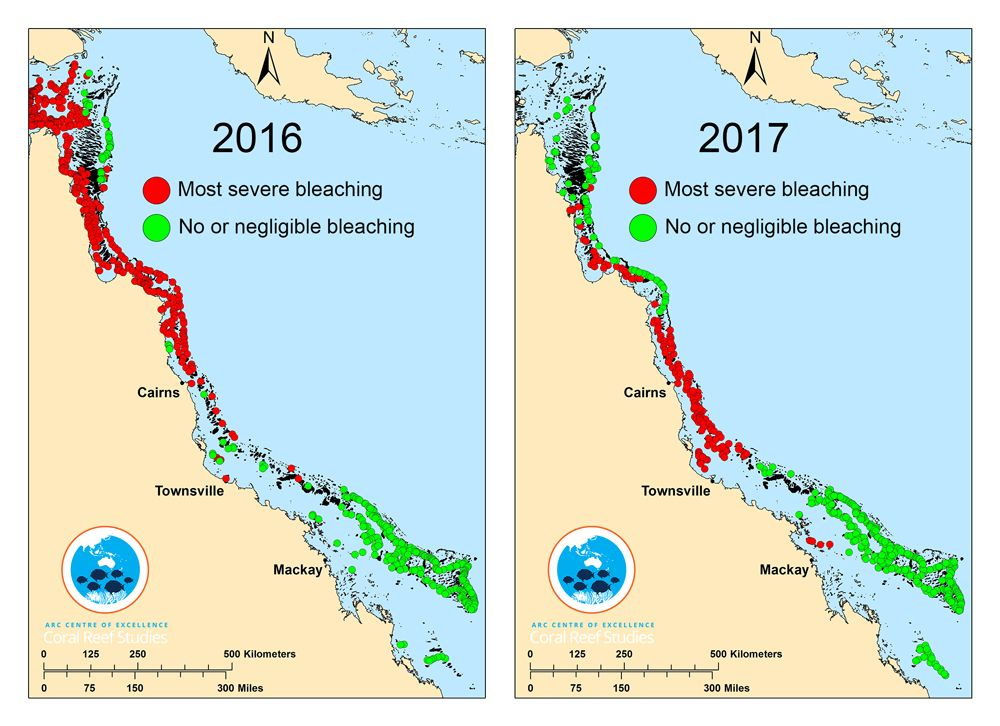 Map showing coeal bleaching in 2016 and 2017 | great barrier ... on blank map of red sea, blank map of english channel, blank map of sea of japan, blank map of pacific ocean,