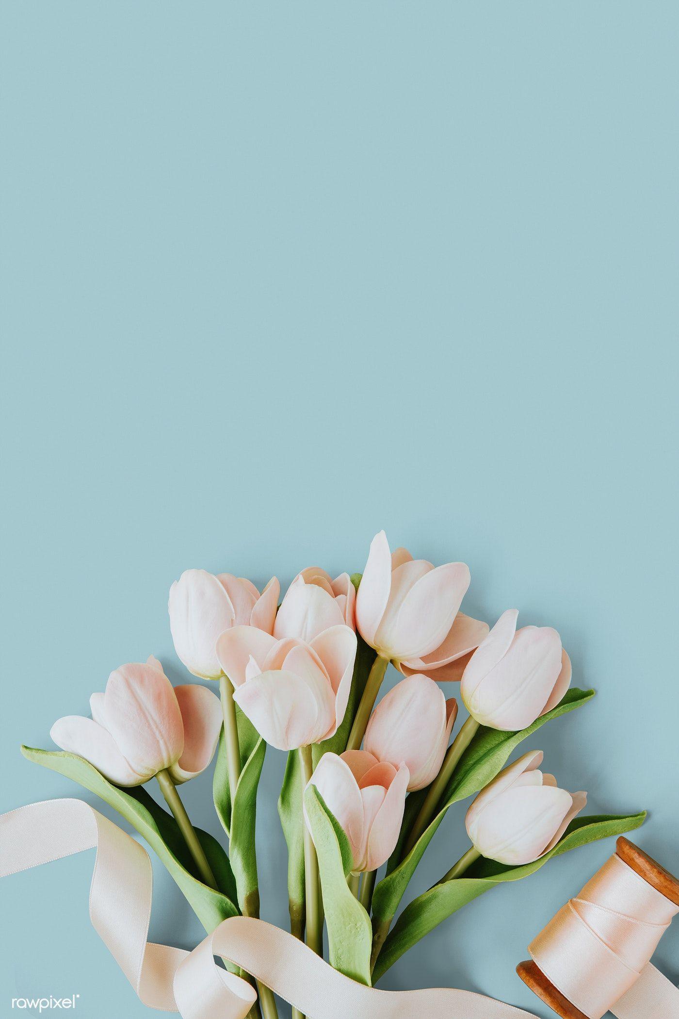 Download Premium Psd Of Pink Tulip On Blank Blue Background Template ดอกไม วอลเปเปอร ภาพ
